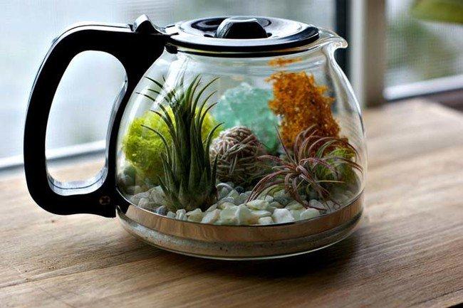 terrarium-coffee-pot-planted