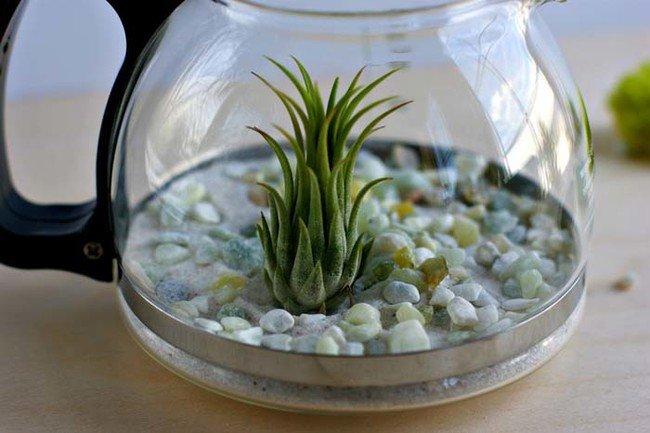 terrarium-coffee-pot-working