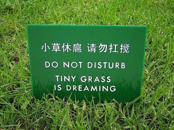 tiny grass