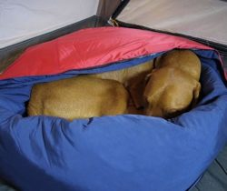 2-In-1 Dog Bed And Sleeping Bag