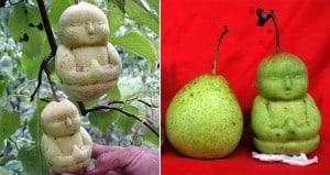 buddhas pears