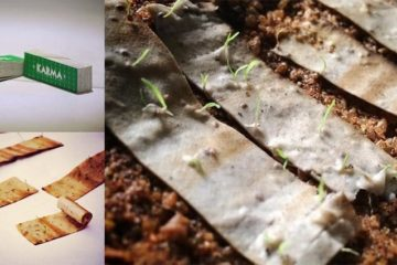 Biodegradable Cigarette Filters Tree Seeds