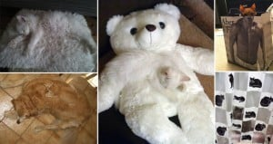 Camouflaged Cats