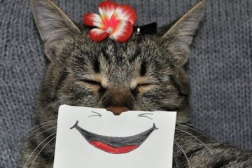 cat funny-paper mouth smile