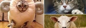 Cat Sheep costume