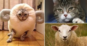 Cat Sheep costume