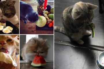 Cats Eating Strange Things