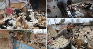 Chinese Woman Feed Stray Dogs