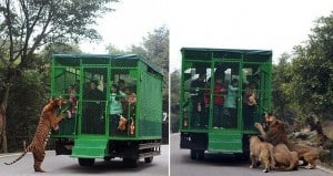 Lehe Ledu Wildlife Zoo China people in cages