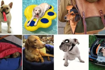 Items Every Dog Loves