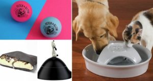 Items Every Dog Will Love