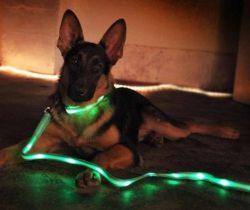 LED dog leash and collar