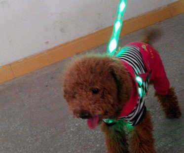 LED dog leash and collar green