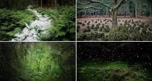 Mystical Forest Artworks