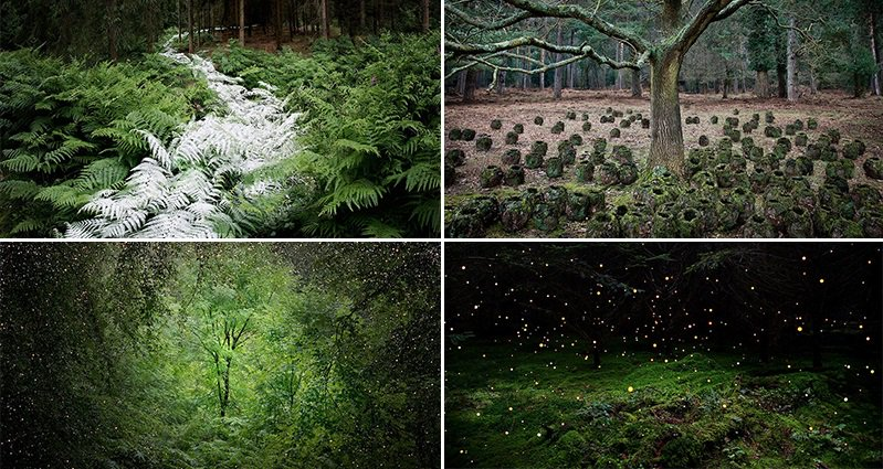 Mystical Forest Artworks