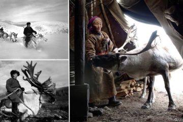Reindeer People Of Mongolia