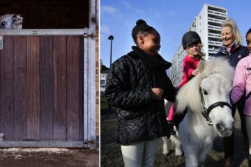 pedro Shetland Ponys Stable periscope