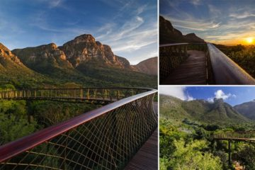 canopy walkway above trees cape town