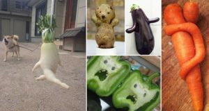 fruit and vegetables that look funny