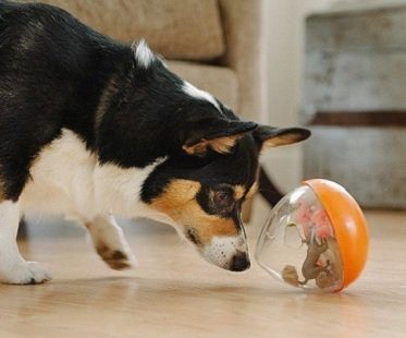 Wobble Ball Dog Toy