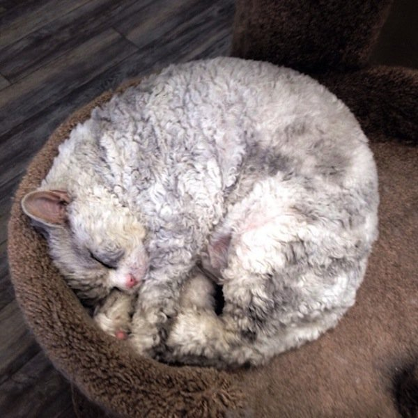 albert-sleeping