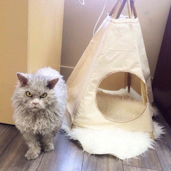 albert-tent