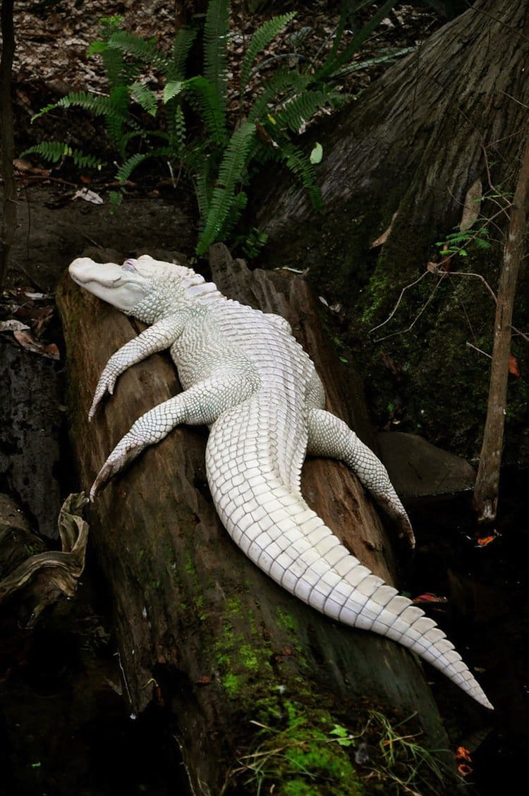 15 of the coolest and cutest looking albino animals