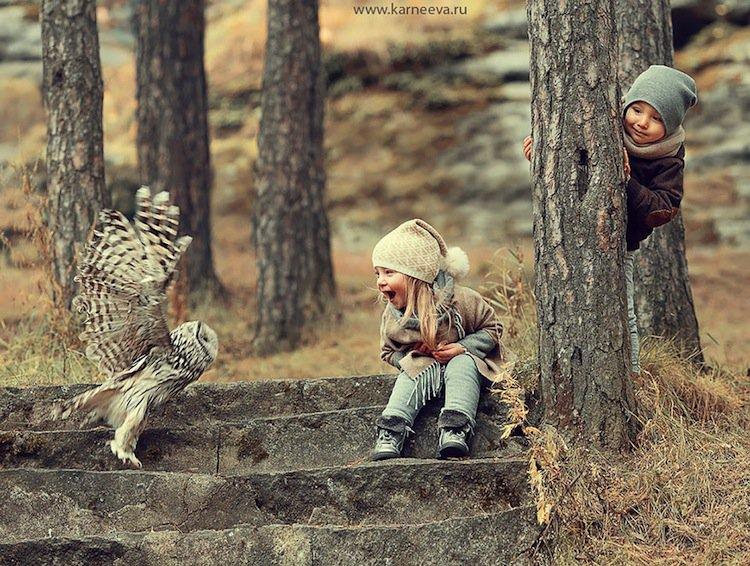 animal-owl
