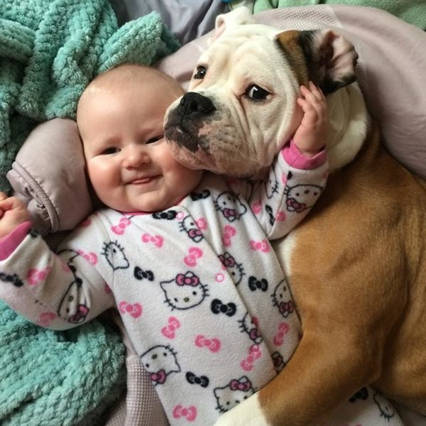 baby-and-bulldog
