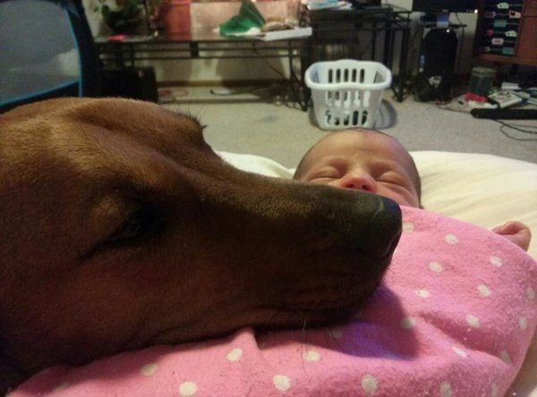 baby-and-dog-guarding