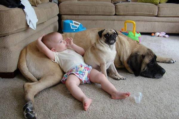 baby-and-dog-lounger
