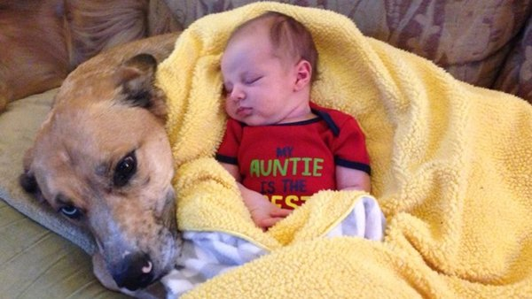 baby-and-dog-sleeps