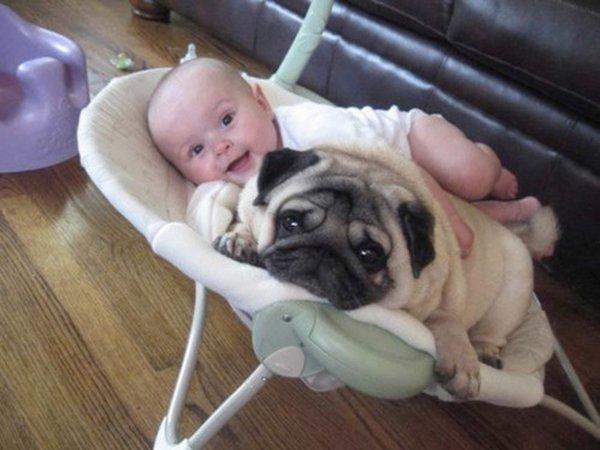 baby-and-pug