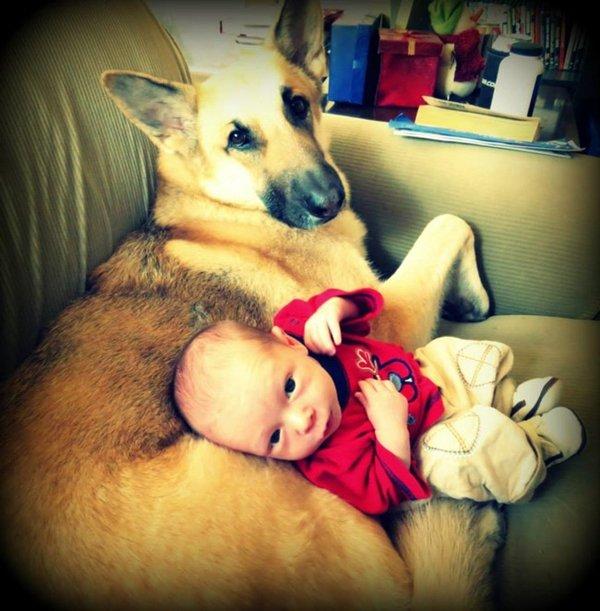 baby-and-shepherd