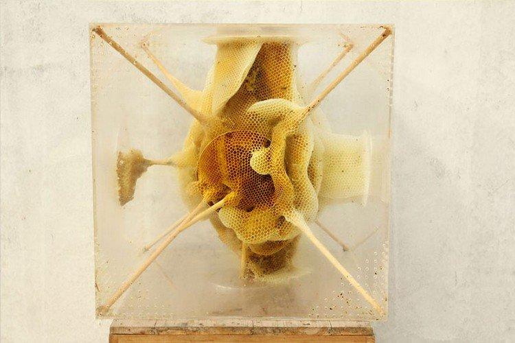 bee honeycomb sculpture