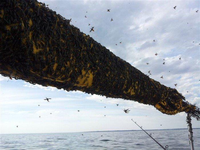 beetles sea