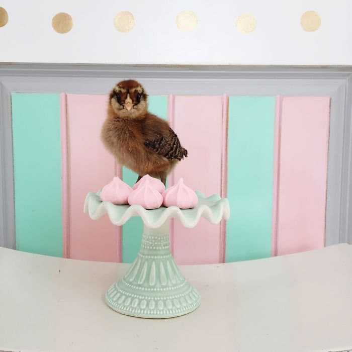 brown chick cake stand