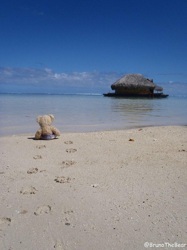 bruno-bear-beach