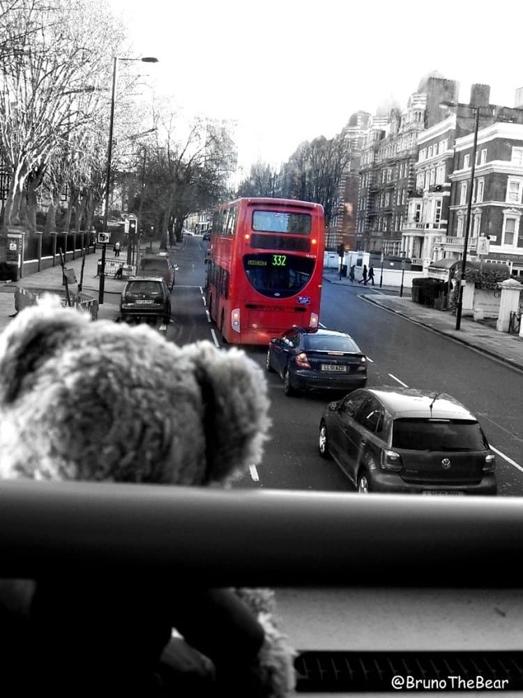bruno-bear-london