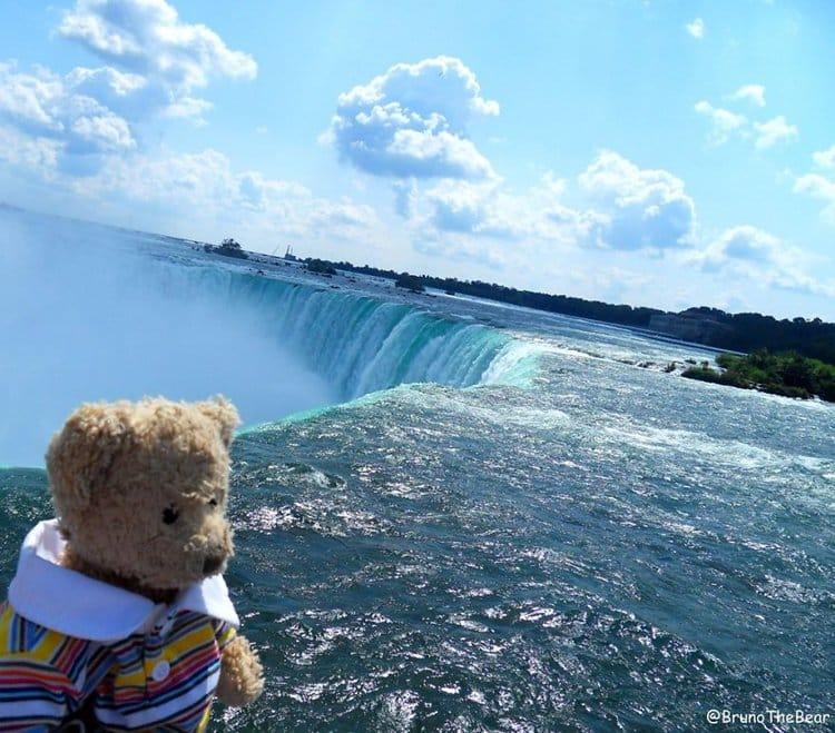 bruno-bear-niagra-falls