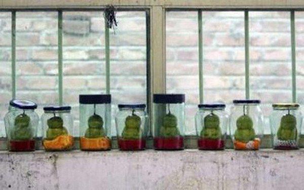 buddha pears row jars