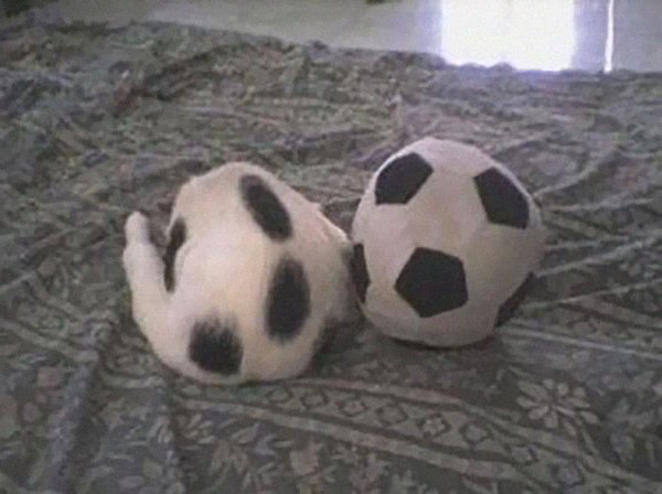camo-cats-ball