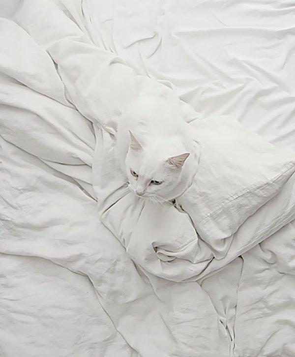 camo-cats-bed