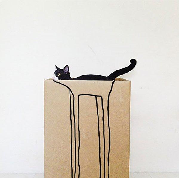 camo-cats-box