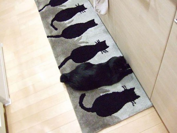 camo-cats-cat-mat
