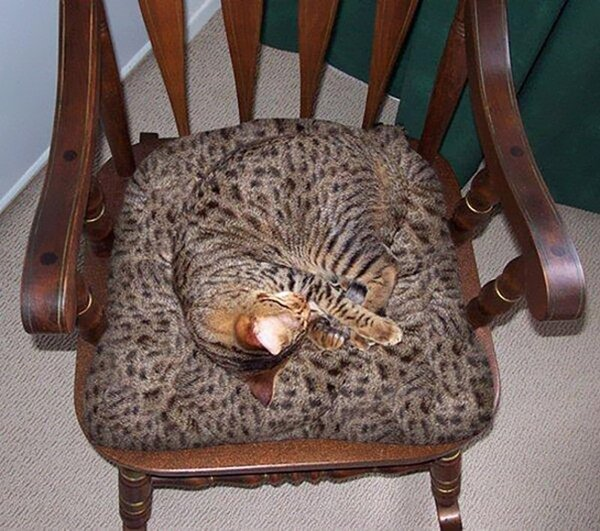 camo-cats-chair