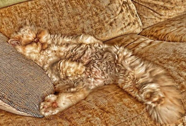 camo-cats-couch