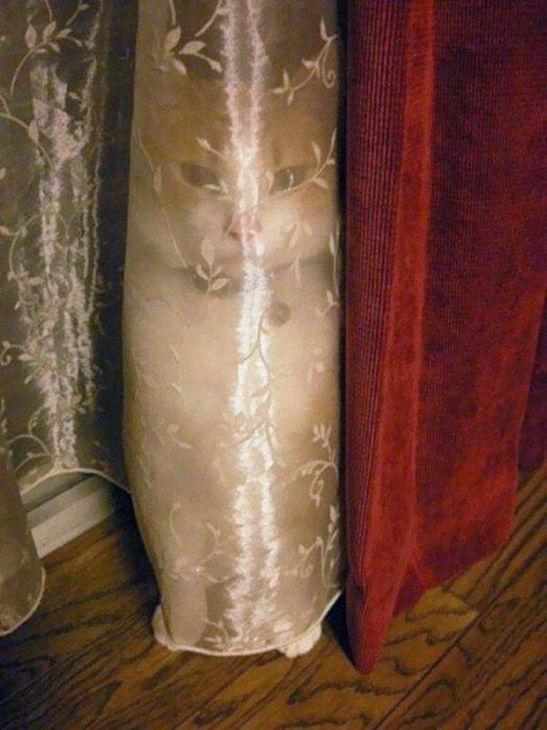 camo-cats-curtain