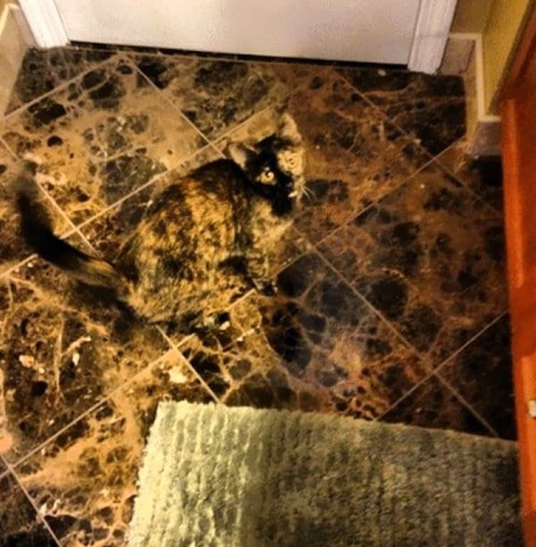 camo-cats-floor