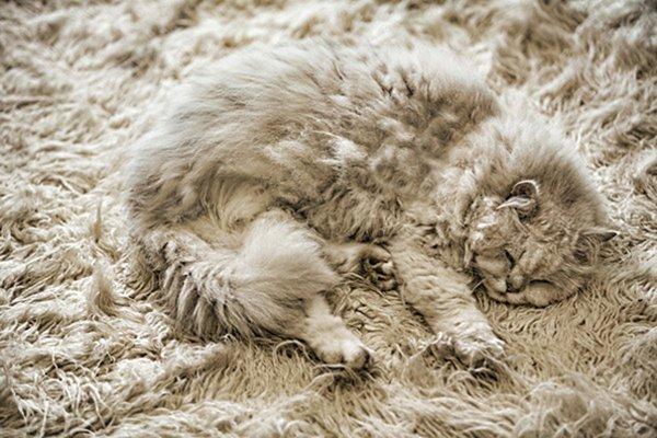camo-cats-fluff